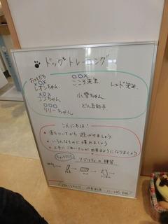 CIMG0603 (1).JPG
