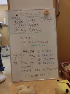 CIMG0956.JPG