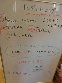 CIMG3667.JPG