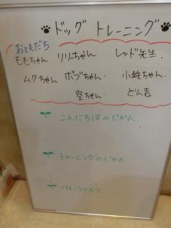 CIMG4239 (1).JPG